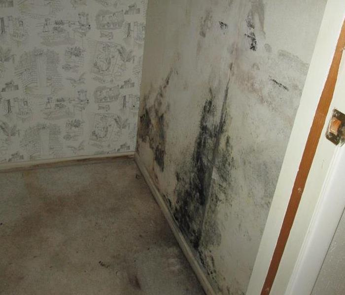 Mold Remediation How to Prevent Mold From Growing In your House