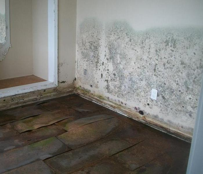 How To Detect Mold In Your Home