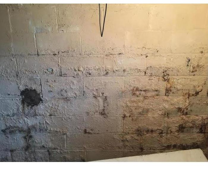 Mold Remediation Lesser Known Tricks to Preventing Mold